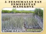 2 persemaian dan pembibitan mangrove