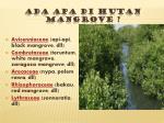 ada apa di hutan mangrove