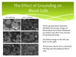 the effect of grounding on blood cells