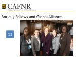 borlaug fellows and global alliance
