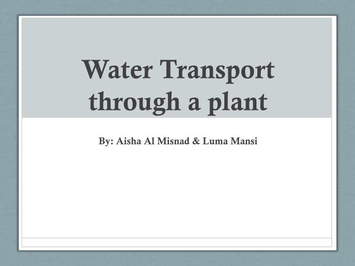 water transport through a plant n.