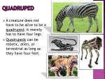 quadruped1