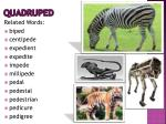 quadruped2