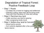 degradation of tropical forest positive feedback loop