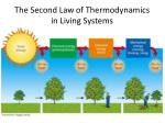 the second law of thermodynamics in living systems