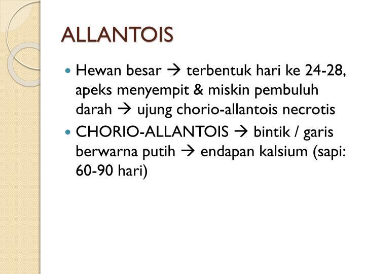ALLANTOIS