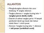 allantois3