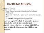 kantung amnion2