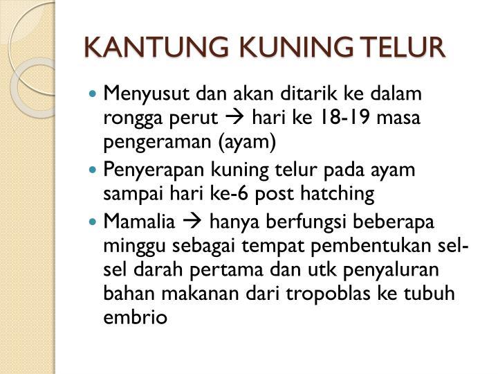 KANTUNG KUNING TELUR