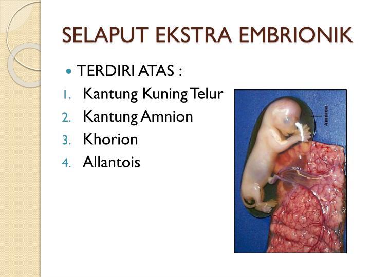 Selaput ekstra embrionik2