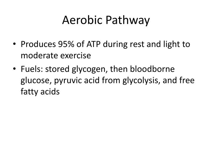 Aerobic Pathway