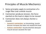 principles of muscle mechanics