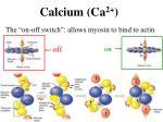 calcium ca 2