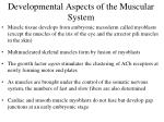 developmental aspects of the muscular system