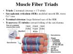 muscle fiber triads