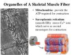 organelles of a skeletal muscle fiber