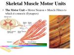 skeletal muscle motor units