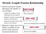 stretch length tension relationship