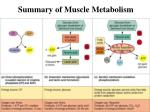 summary of muscle metabolism