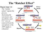 the ratchet effect