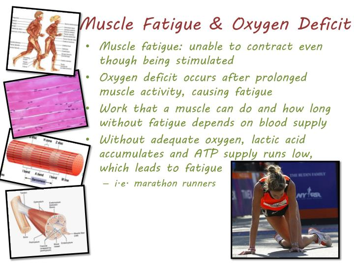 Muscle Fatigue & Oxygen Deficit