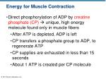 energy for muscle contraction1