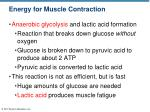energy for muscle contraction3