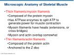 microscopic anatomy of skeletal muscle3