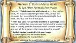 genesis 1 elohim makes adam eve after animals are made