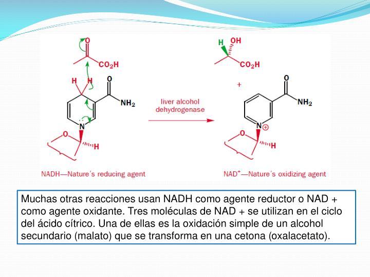 Muchas otras reacciones usan NADH como agente reductor o NAD + como agente oxidante. Tres moléculas de NAD + se utilizan en el ciclo del ácido cítrico. Una de ellas es la oxidación simple de un alcohol secundario (malato) que se transforma en una cetona (