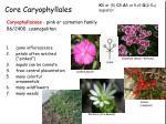 core caryophyllales2