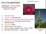 core caryophyllales3