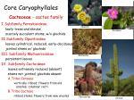 core caryophyllales4