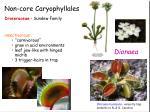 non core caryophyllales5