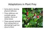 adaptations in plant prey1