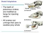 dental adaptations