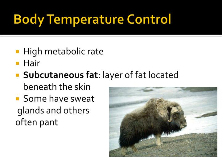 Body Temperature Control