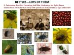 beetles lots of them