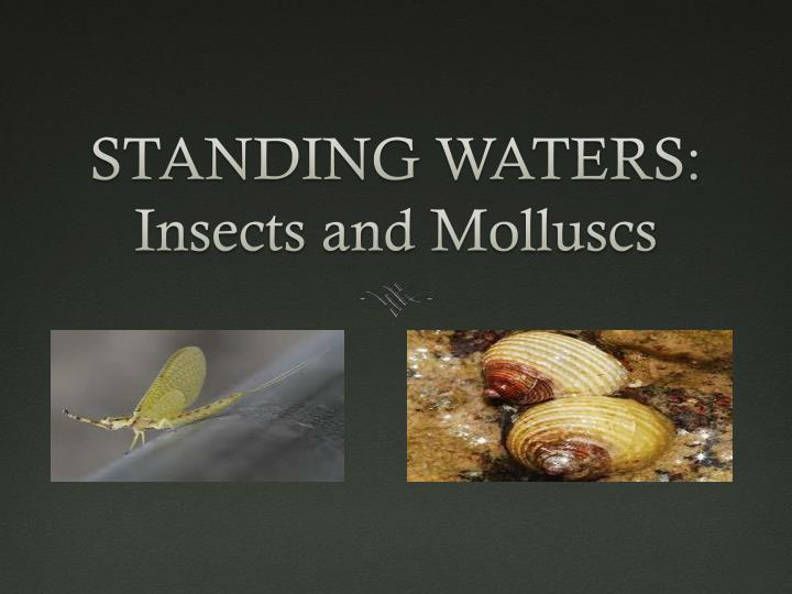 standing waters insects and m olluscs n.