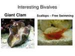 interesting bivalves