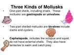 three kinds of mollusks