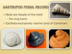 gastropod fossil record