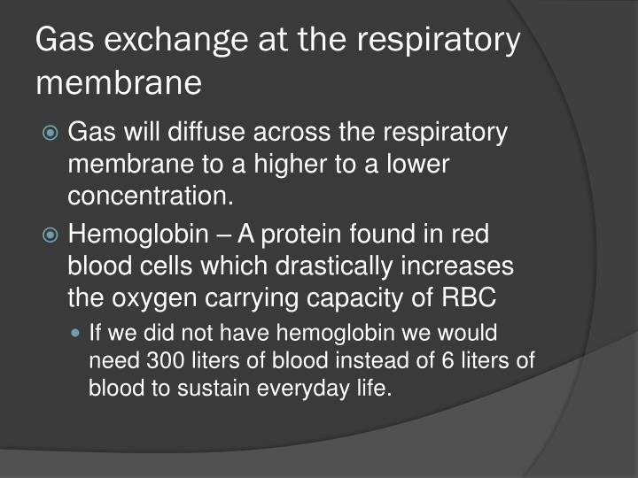 Gas exchange at the respiratory membrane