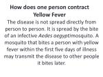 how does one person contract yellow fever