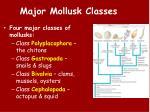 major mollusk classes