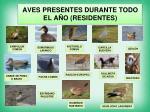 aves presentes durante todo el a o residentes