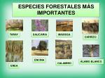especies forestales m s importantes