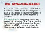 dna desnaturalizaci n