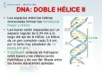 dna doble h lice ii