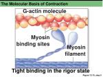 the molecular basis of contraction3